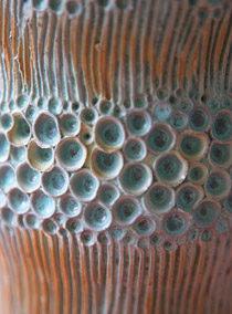 coral-stem-dtl